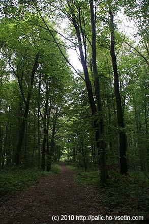 Pohodová hřebenovka zcela ukrytá v lese